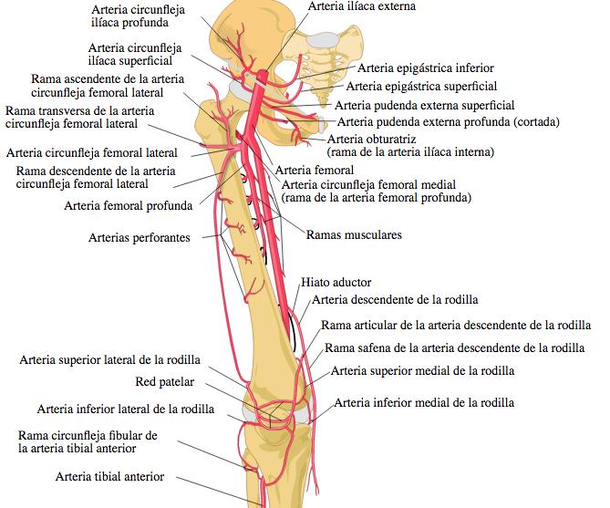 INTERV 3.1 Cateterismo arterial periférico normal con técnica ...