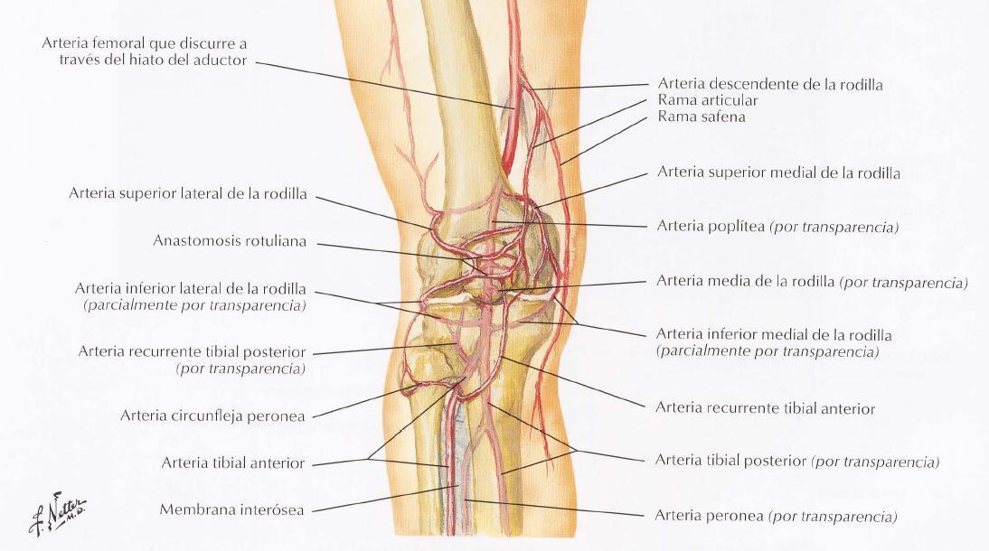 INTERV 3.2 Cateterismo arterial periférico normal con técnica de ...